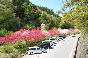 花桃の里 駐車場